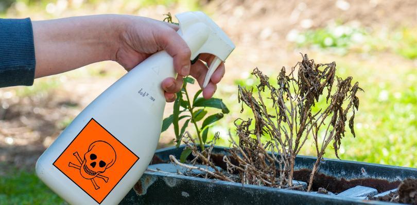 Chemiczne środki ochrony roślin (ŚOR)