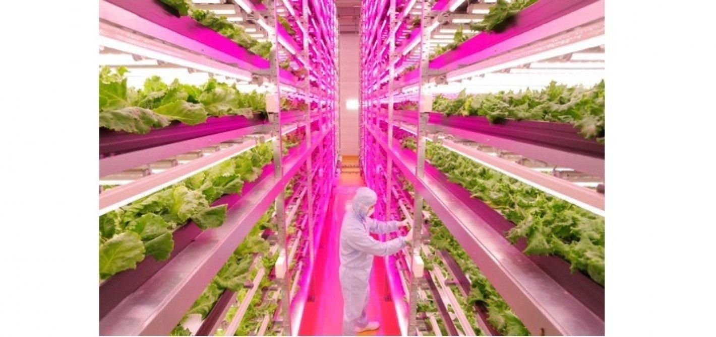 Wyzwania dla rolnictwa - uprawy przyszłości